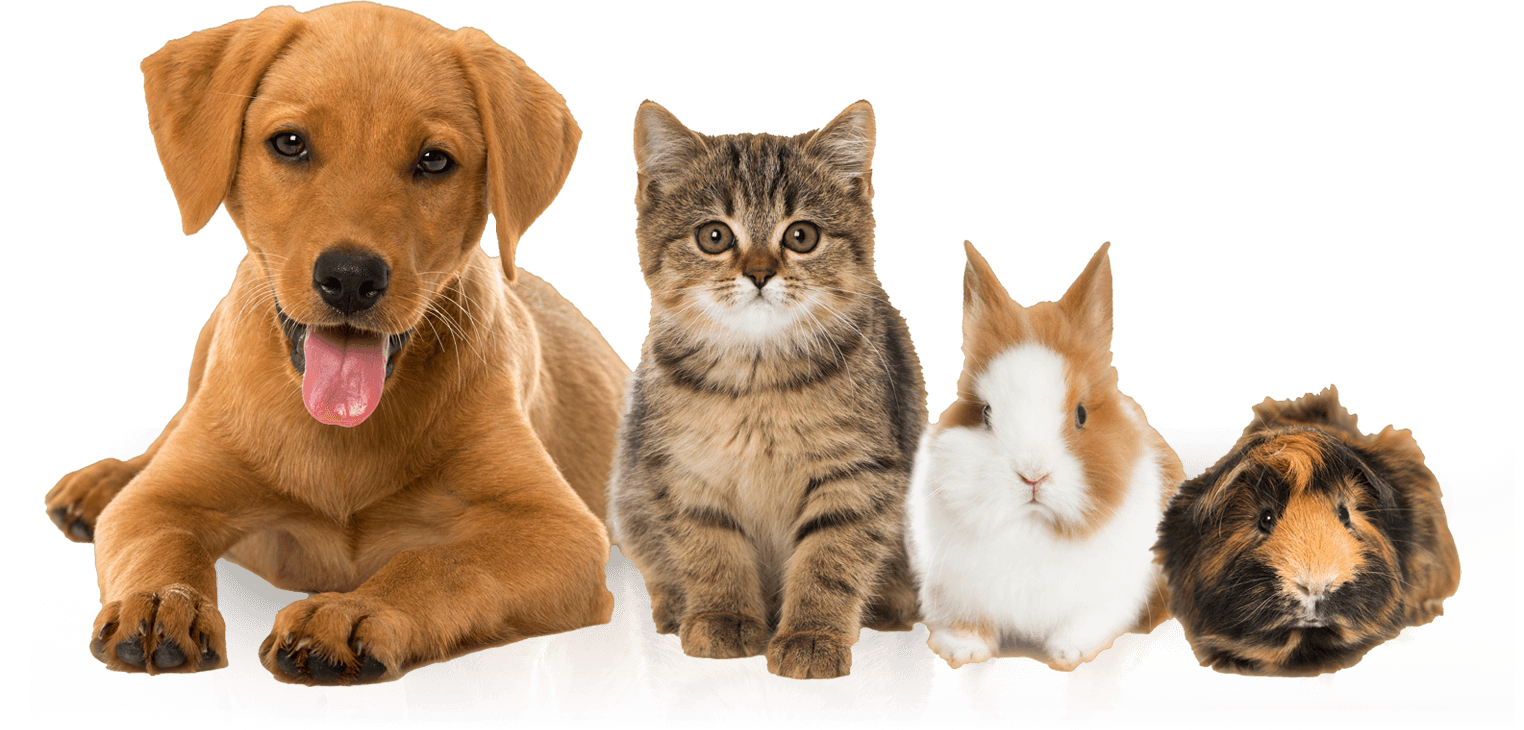 Find Pet Insurance - USA Based