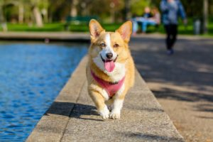 Finding the Perfect Pet Insurance Online