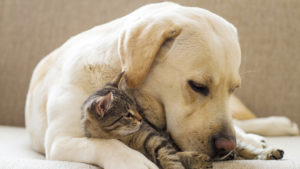 Pet Health Insurance - Finding the Right Policy