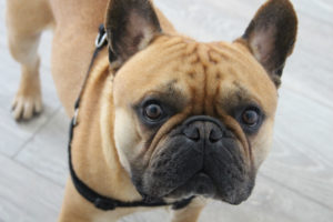 Tesco Pet Insurance - Protect Your Pet With One of the UK's Best Known Brands